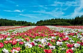 field of flowers communal garden