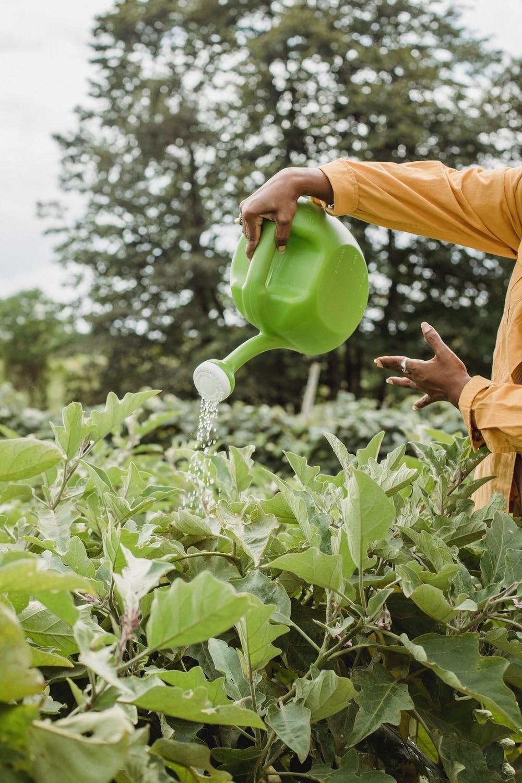 unrecognizable-woman-watering-plants-from-pot-in-garden farm business
